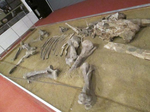 Oasele mamutului de Covasna!